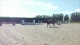 Show jumpers for sale Easy van de Hoeven
